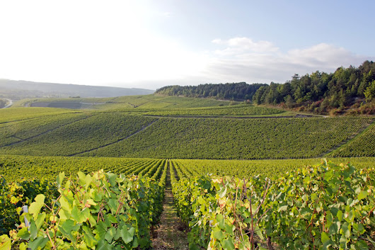 Follow the Yonne Wine Tourism Trail for a great week in Burgundy - France Motorhome hire and Campervan rental