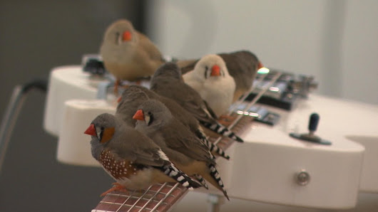 70 birds play guitar in new art exhibit at Montreal Museum of Fine Arts