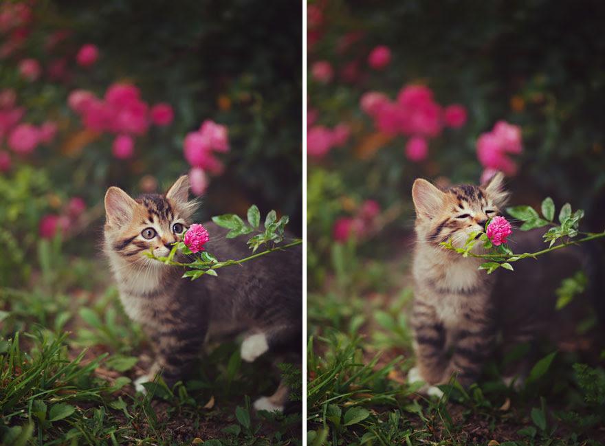 Gatinho Flores de cheiro