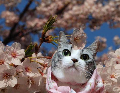 kucing cantik  bawah indahnya pohon sakura