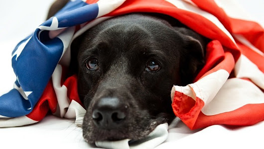 5 Things Humans Do To Make 4th Of July Fireworks Fear & Anxiety Worse For Their Dogs - Dogtime