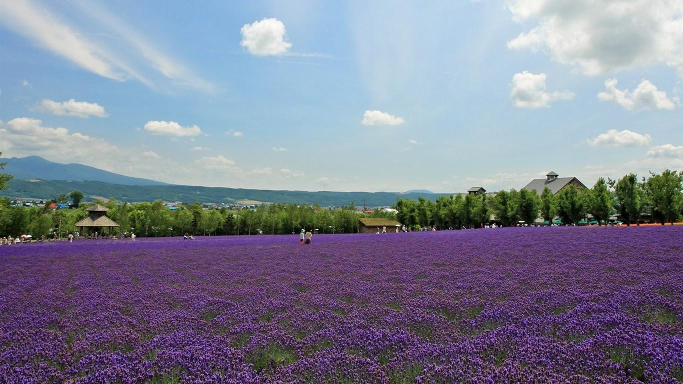 夏日北海道郊外风景4 1366x768 壁纸下载 夏日北海道郊外风景 风景