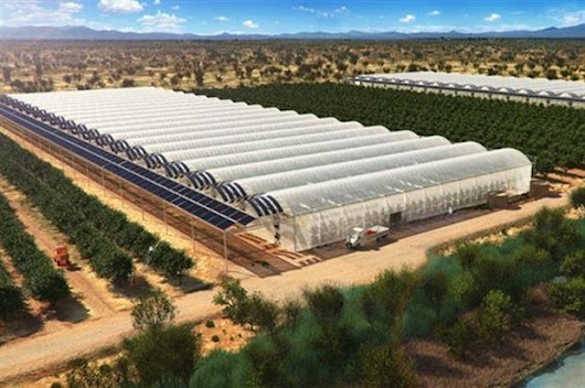 British expertise to bring seawater-based glasshouses to Africa