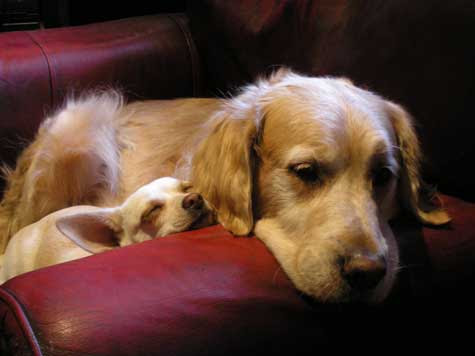 Pet Quotes Quotes About Pet Loss And Pet Grief