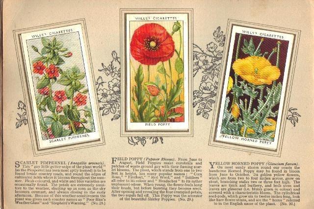 Flower Album5