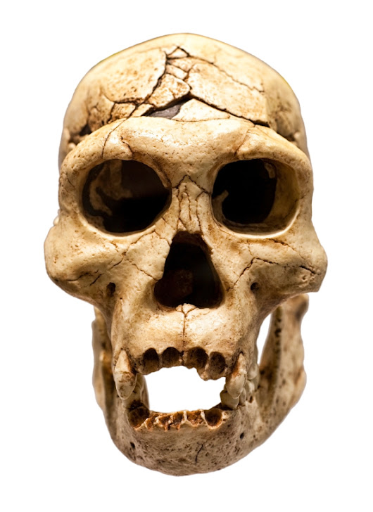Skull Fossil Suggests Republicans Diverged From Modern Humans Earlier Than Thought