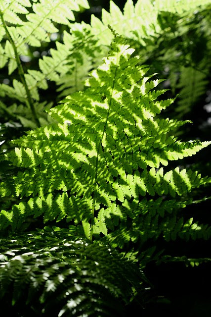 fern, washington park