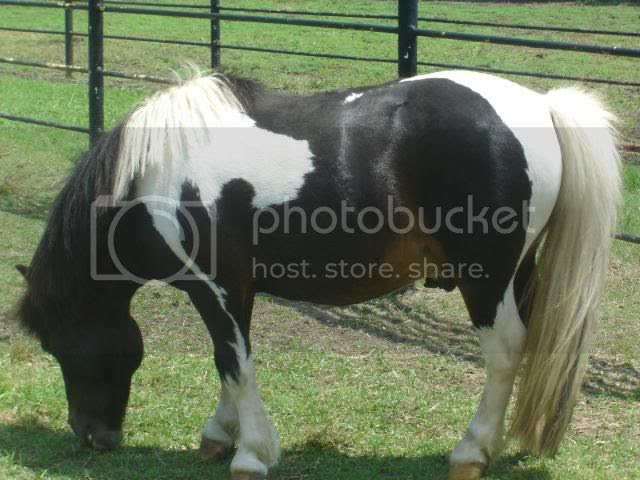 Southfork Ranch Spotted Pony Side Pictures, Images and Photos