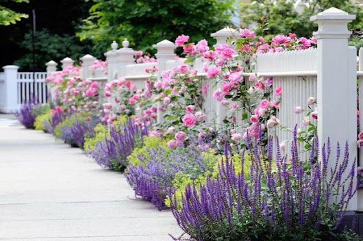 4 Gorgeous Garden Looks for a Narrow Planting Strip