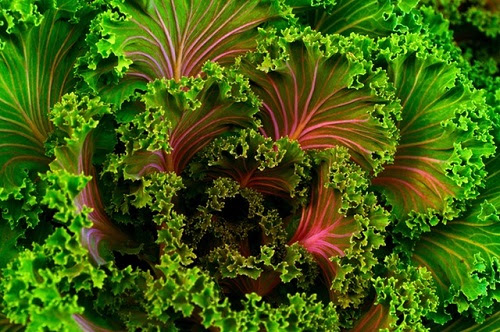How Leafy Greens Help Your Heart and Blood Pressure