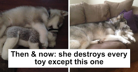 These 10+ Pictures Of Adorable Pets Sleeping With Toys Will Be Too Much Cuteness For You To Take