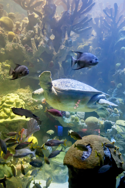 Best Aquariums in the Midwest - HotelCoupons.com Blog