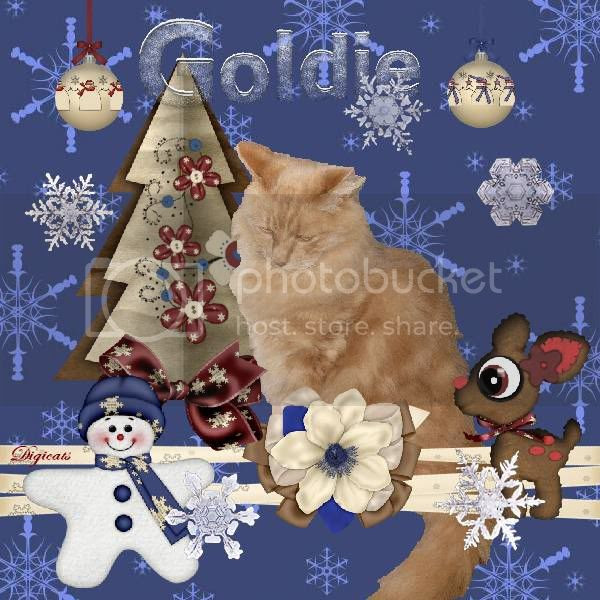 Snowcats Project,Ginger Cat,Domestic Cat,Winter,Snowman,Holiday Glitter