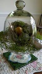 nest under glass
