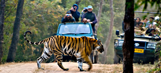 How to Plan an Incredible Wildlife Tour to India