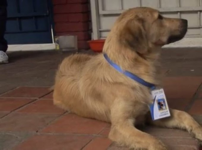 El perro que recibió un nombramiento oficial en un colegio tras robarse el corazón del director
