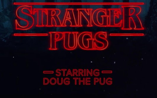 Stranger Pugs Parody Video Is the Cutest Thing You'll See All Weekend! - Dread Central