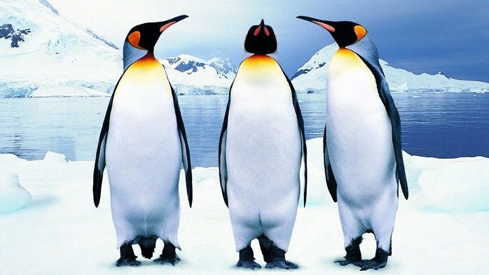 penguins37 (700x393, 284Kb)