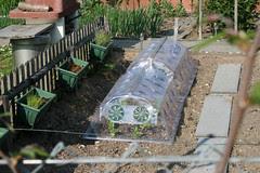 basel garden 008