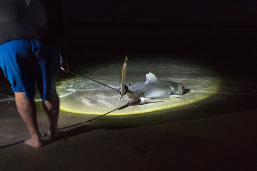 Anglers' online boasts reveal illegal shark hunting