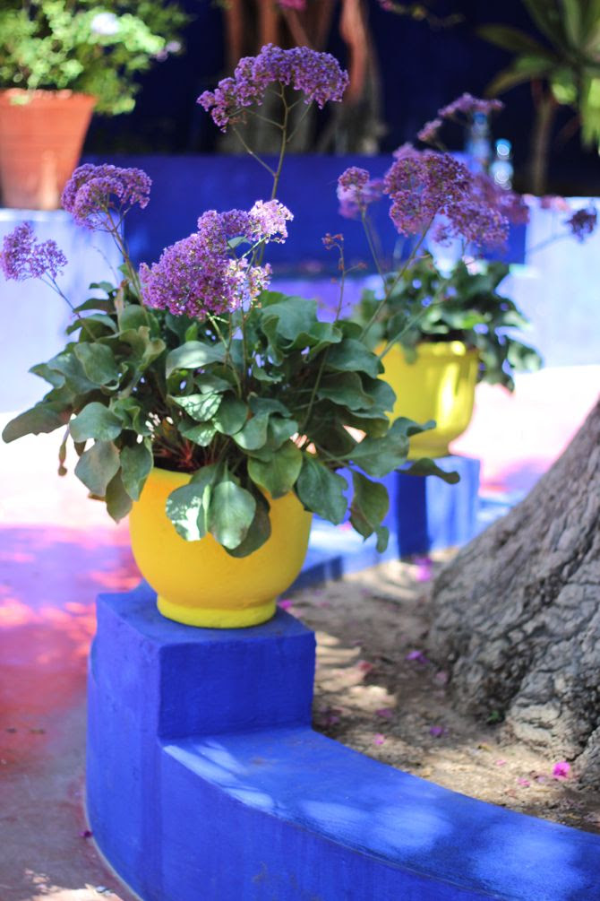 photo 17-jardin majorelle_marrakech-YSL_zps64nq9rtd.jpg