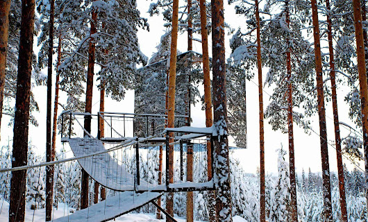 Discover the Spell of Nature at Treehotel, Sweden