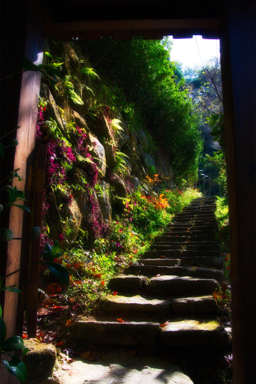 atraversso: Come and explore my daydream with me. We are in a garden full of flowers. The birds are chirping. The leaves are rustling in the trees as a soft wind blows. A stone staircase looms before us. If we follow this staircase, where do you think it would take us? To another garden or to a quaint house? Let me close my eyes. I see a secluded garden with peach trees. Beneath the shade of the trees, sits a lone bench surrounded by red roses. I sit down on the bench to enjoy the view. Achoo! I forgot it's allergy season and I'm allergic to roses. If you don't like this ending, you can imagine any ending you would like. That's the beauty of your imagination.