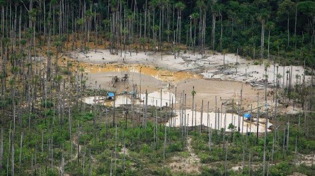 La deforestación mundial de bosques se redujo en el año 2014