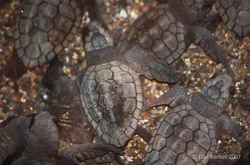 Turtle watch (2)