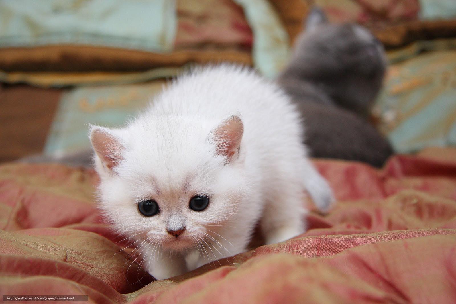 壁紙をダウンロード 潜入 かわいい 猫 猫 デスクトップの解像度の