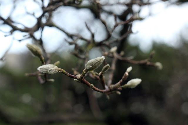 tree budding out, 2010 edition