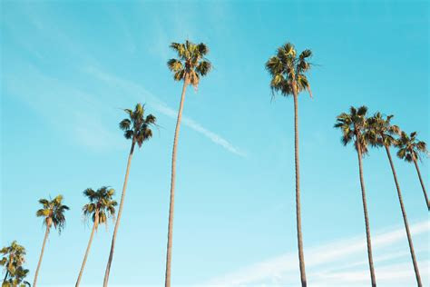 images nature branch cloud sky palm tree