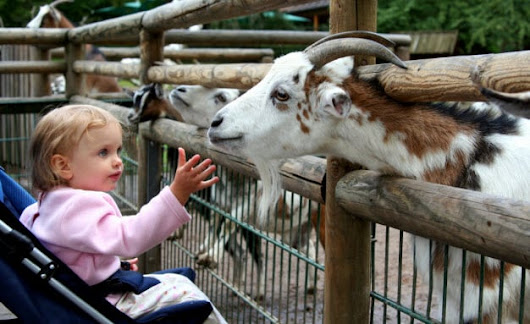 Take a Trip to Mesker Park Zoo this Holiday Season