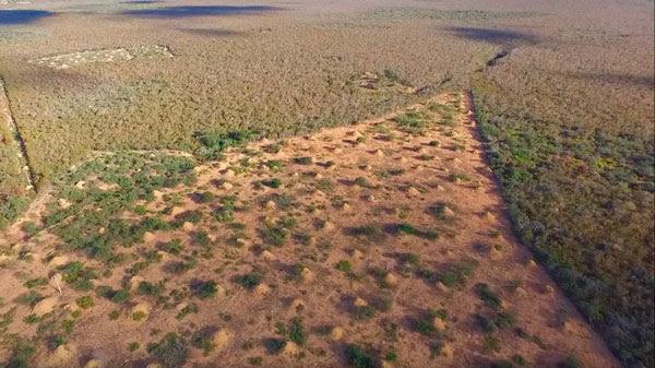 Resultado de imagem para Cupinzeiro gigante de quatro mil anos é descoberto no nordeste brasileiro