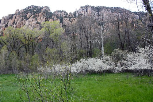 Oak Creek Canyon in Bloom