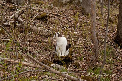 Buddy on a hike-9.jpg