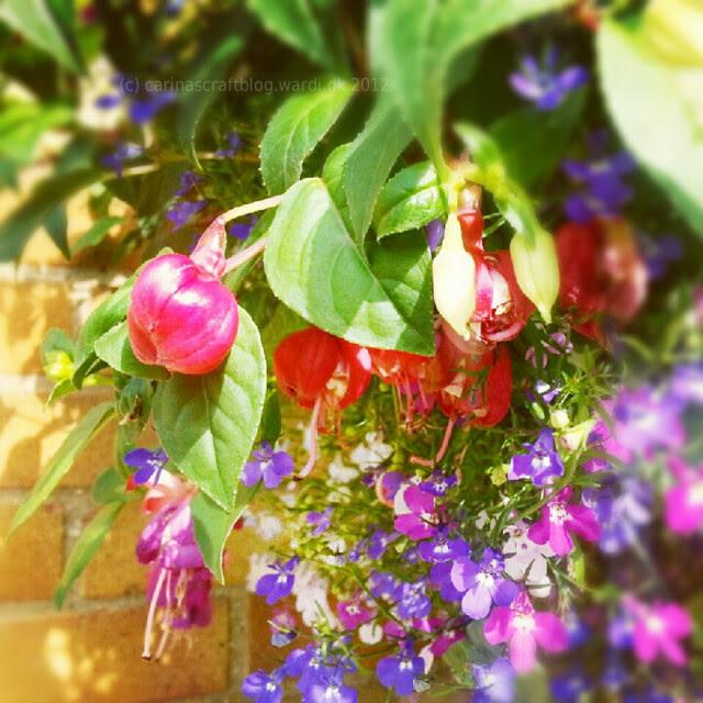 Flowers in inlaws' garden