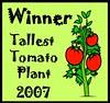 tallest tomato plant award; 2007