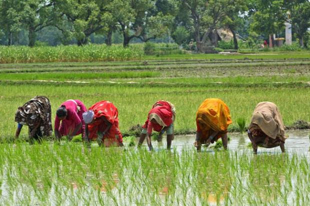 Women in Indian Agriculture