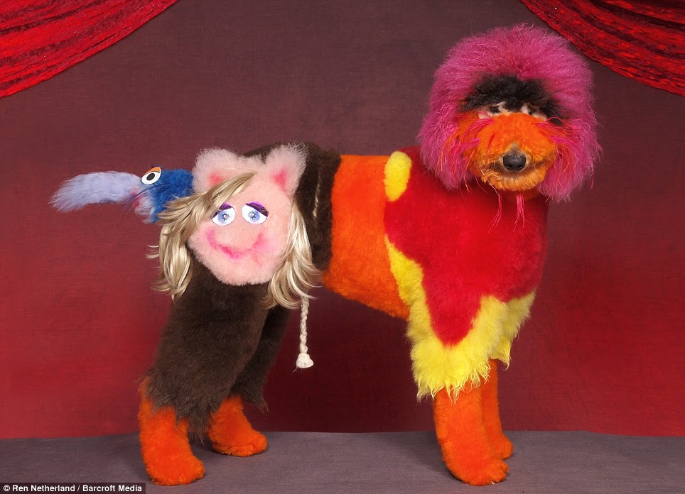 Made up: Miss Piggy's face is clearly visible on the body of this terrier