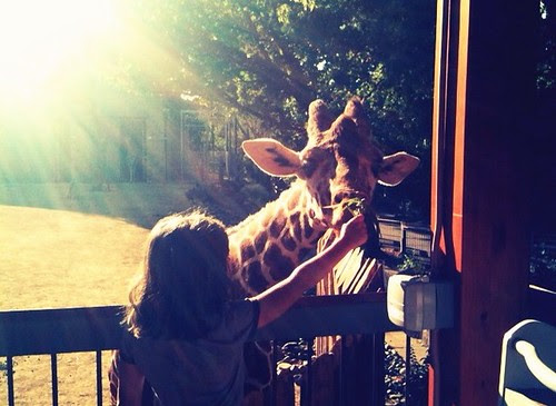 """Twilight Thursday"" at the Sacramento Zoo"