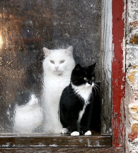 Content In A Cottage Indoor And Outdoor Cats