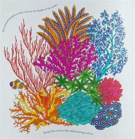 millie marottas coral millie marotta   color