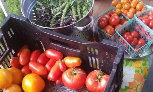 New farmers' market organized by South Salt Lake locals | Valley Journals