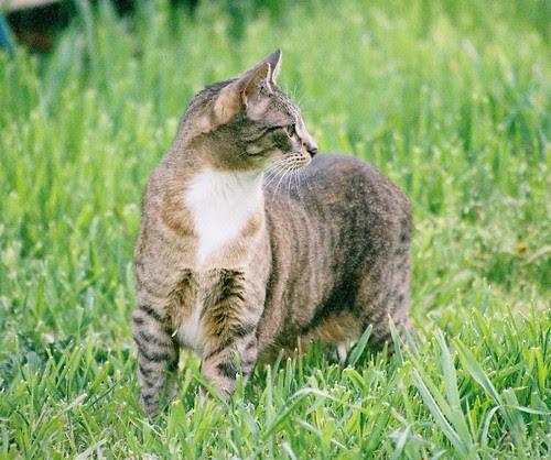 Widget The Cat