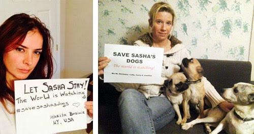Save Sasha!