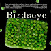 Download Now: Birdseye: The Adventures of a Curious Man by Mark Kurlansky PDF