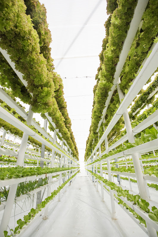 How does Vertical Farming and the IoT Intersect in the Cleanroom? - Cleanroom News | Berkshire Corporation