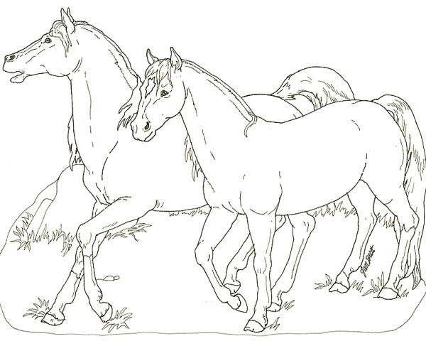Testa Di Cavallo Da Colorare Stampae Colorare