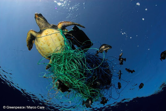 New global study confirms microplastic found in nearly all species of marine animals looked at - NationofChange